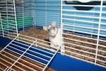 Уход за декоративные крысы в домашних условиях 180