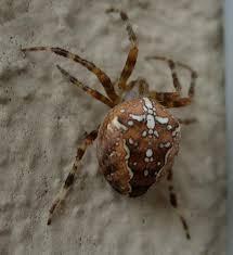 Résultats de recherche d'images pour «photo araignée»