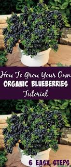 Organic Kitchen Gardening 1000 Kitchen Garden Ideas On Pinterest Herbs Garden Diy Herb