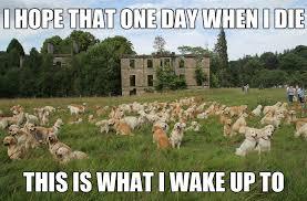 Golden Retriever Memes. Best Collection of Funny Golden Retriever ... via Relatably.com