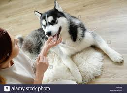 Woman with husky at home Stock Photo, Royalty Free Image ...