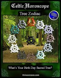 Celtic Tree Chart Celtic Tree Astrology Thrive On News Spiritual Magazine