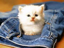 Cute Cats HD Wallpapers for Android ...