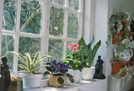 house plants. Houseplants House Plants