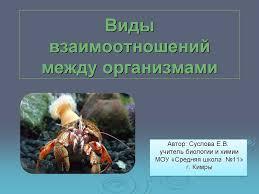 Урок по теме Виды взаимоотношений между живыми организмами  Презентация к уроку