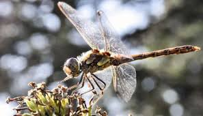 A few showers are possible early next week.… Weather Radar Has Been Picking Up Swarms Of Dragonflies Perhaps Because Of Heat Wave Forecasters Say Chicago Tribune