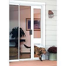 glass dog door in glass model vertical window pet door dog doors sliding glass doors adelaide