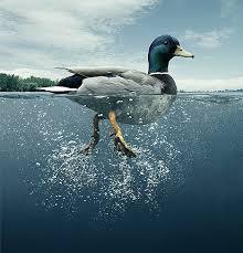 Risultati immagini per acqua calma