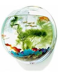 Decorative Fish Bowls Amazon Fish Bowls Aquariums Fish Bowls Pet Supplies 58