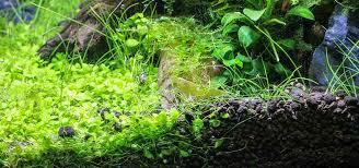mastering aquarium substrate tropical