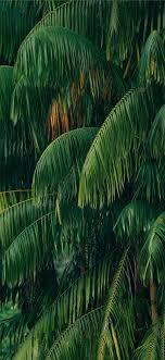 Jungle Wallpaper - HayPic