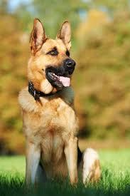 bite levels in dogs dr sophia yin