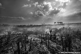 essay essay on deforestation essays on deforestation picture essay deforestation essay topics essay on deforestation