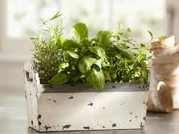 Small Picture Indoor Herb Garden Kits to Grow Herbs Indoors HGTV