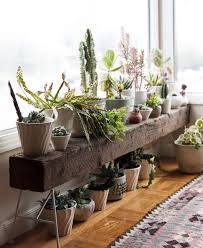 this is probably the best way to decorate your window space greens look amazing by amazing office plants