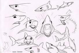 mako shark drawing. Delighful Mako Mako Shark Sketches By Zavraan  On Shark Drawing R
