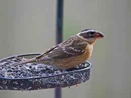 Attract Birds To Your Backyard: Part 3: Styles Of Bird Feeders ...