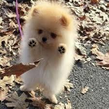 cute baby dog.  Cute Adorables Cachorros Ms In Cute Baby Dog