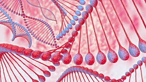 Nucleic Acid Definition Function And Examples Biology
