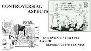 pro stem cell essay