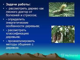 Презентация на тему Тема Энергетика деревьев РЕФЕРАТ Тема  5 Задачи