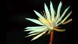 average american flower size 7 most expensive flowers in the world pollen nation