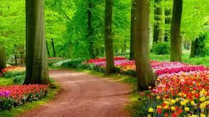 Beautiful Garden Flower Landscape ...