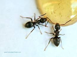 Ants In Bathroom Custom Inspiration Design