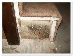mold removal pittsburgh. Exellent Mold Mold Men Pittsburgh Black Mold In Removal C