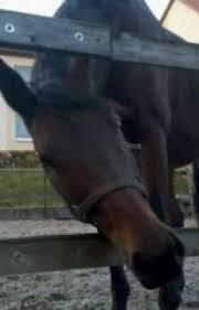 Pferde Spüche Etwas Für Pferdefreunde Sprüche über Pferde Zum