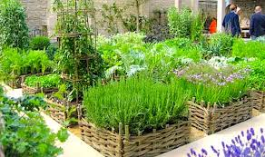 Small Picture Herb Gardening For Beginners The Gardens