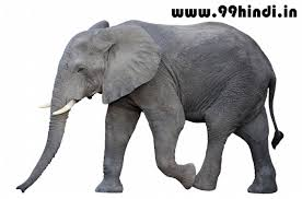 essay about elephant co essay about elephant