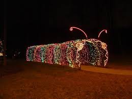 caterpillar in lights
