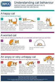 Cat Body Language Chart Dog Body Language Chart The Clues To Your Pets Well Being
