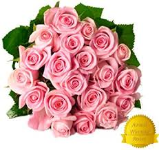 flower delivery 25 light pink premium fresh roses free gift message