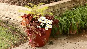 how to grow potted plants both inside