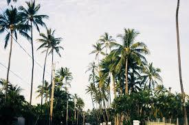 palm trees tumblr. Palm Tree Tattoos Trees Tumblr