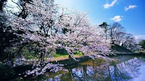 Here you can find spring desktop wallpapers and download best spring desktop backgrounds. Spring Nature Wallpaper 1920x1080 Wallpaper Teahub Io