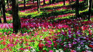 flower gardens pictures. Beautiful Flower Gardens Home Garden Ideas Flowers House Gallery Pictures I