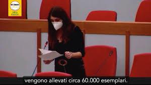 Allevamento visoni in Emilia-Romagna: interpellanza di Silvia Piccinini in  Regione (10-11-20) - YouTube