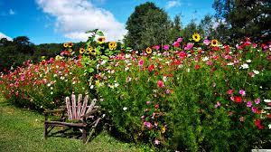 Bloemen In Het Engels Lente Tuin Hd Wallpaper Downloaden