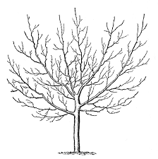 Small Picture Winter Tree Coloring Page Drawing Trees On Pinterest nebulosabarcom