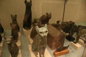 Image result for egyptian cat in museum images