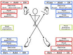 Pnf Patterns Best 48 Best PNF Techniques Images On Pinterest Physical Therapy