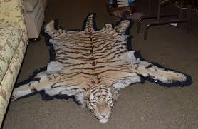 real white tiger skin rug roselawnlutheran tennants auctioneers a tiger skin rug