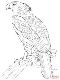 Small Picture Philippine Eagle coloring page Free Printable Coloring Pages