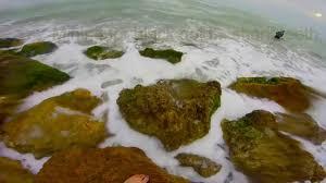 Caspersen Beach Tide Chart Caspersen Beach Fossil Hunting Ofwaterfallsandtrails