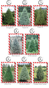 Top 4 Types Of Christmas Trees 2 Balsam FirTypes Of Fir Christmas Trees