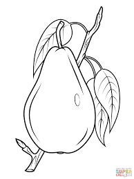 Small Picture Pear on branch coloring page Free Printable Coloring Pages