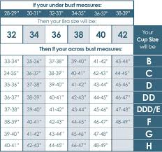 Cup Size Chart Inches Pin By Aerobe On Others In 2019 Bra Size Charts Bra Size